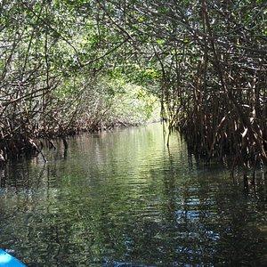 Mangrove Trail through the Islands