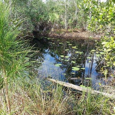 Along Longleaf Pines Preserve Blue Trail