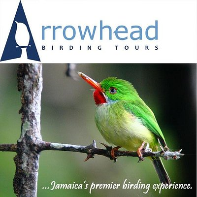 Arrowhead Birding Tours featuring the Jamaican Tody