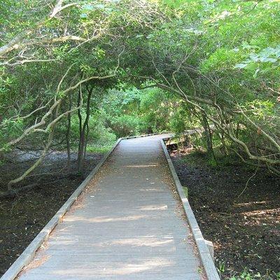 Corolla Estuarine Walkway