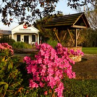 Azaleas in bloom (Taken by Ray Baker of Roving Photography)
