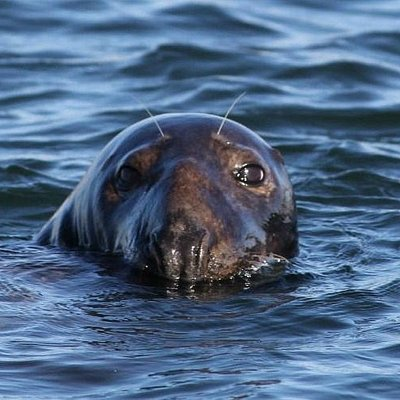 You'll see seals up close on our Seal Watch Adventure Cruise