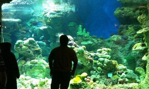fakhi aquarium