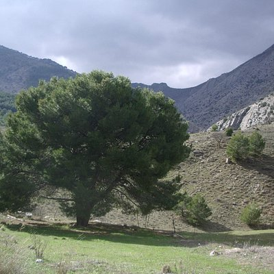 Paisaje de Sierra Magina