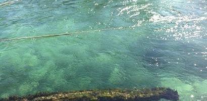 cenote de agua fresca, limpia y clara