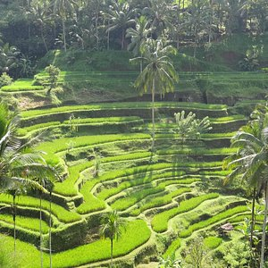 Beautiful terraced rice paddies.