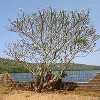Dhamapur Lake-2