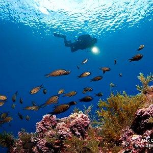 Perfect Marine Life
