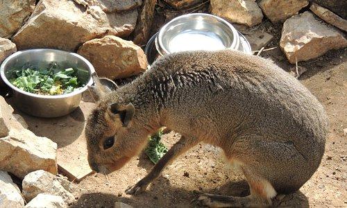 Mill Mountain Zoo animal.