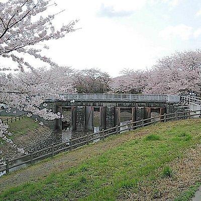 加治川土砂吐水門。土木遺産です。