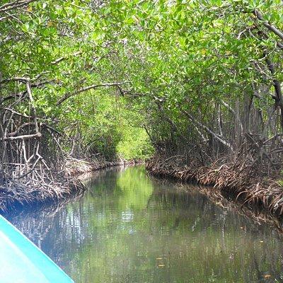 Traveling through the mangroves.