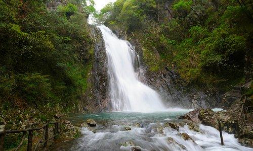 Wuyishan Natural Reserve