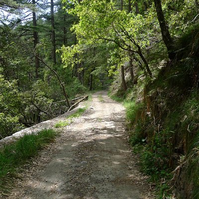 View of trail