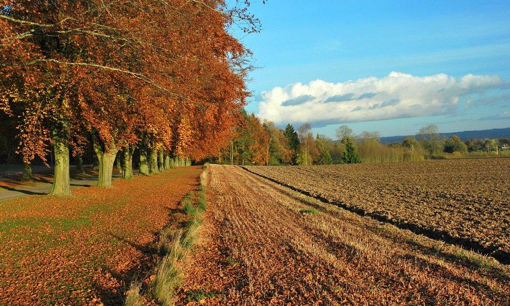 Shobdon Herefordshire