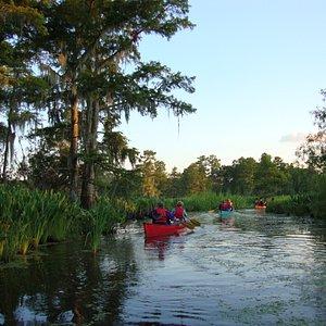 Cane Bayou beauty