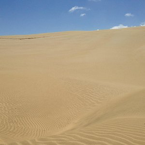 View from the middle of the dunes