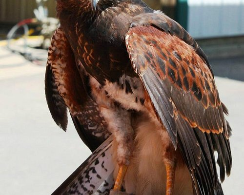 Our class hawk