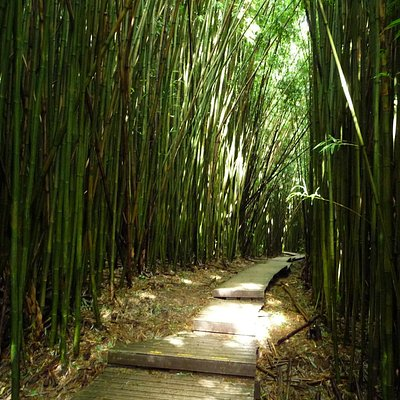 the boardwalk through the bamboo forest