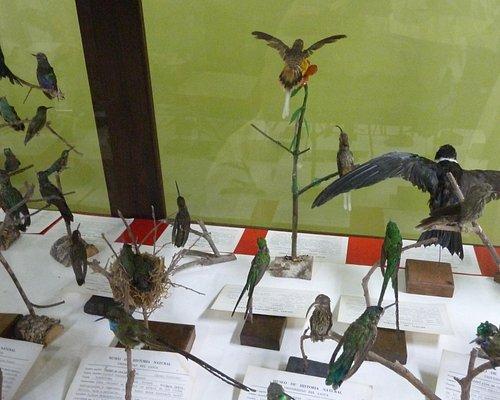 Kolibrisammlung