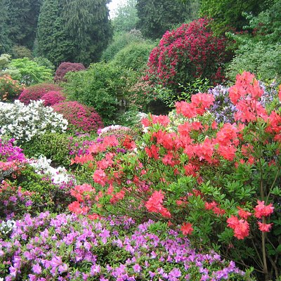 The Azalea Garden in full bloom (usually mid May)
