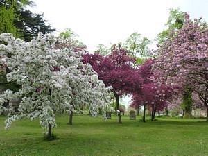 Blossom trees in full glory