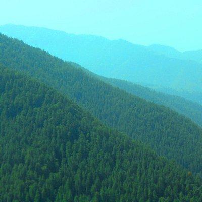 Green Valley ,Shimla 2012,May