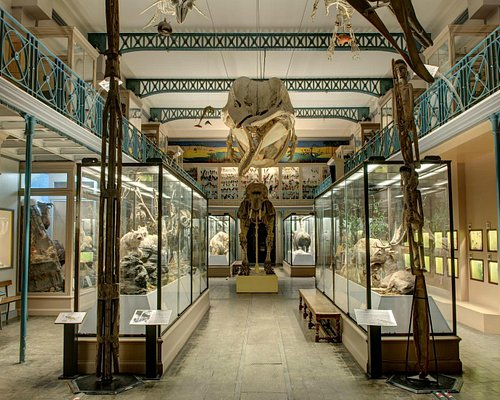 La grande galerie du musée