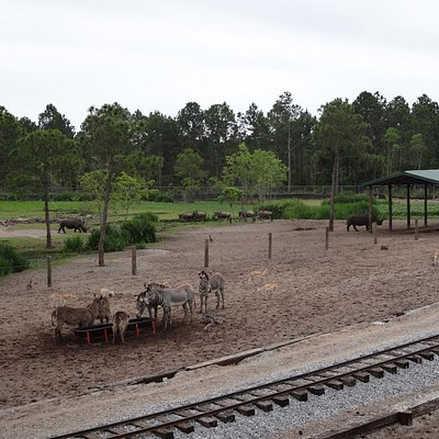 One of the larger areas for the animals