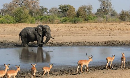 Kruger National Park 2021: Best of Kruger National Park, South Africa  Tourism - Tripadvisor