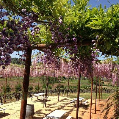 Picnic Area at Shenandoah Vineyards