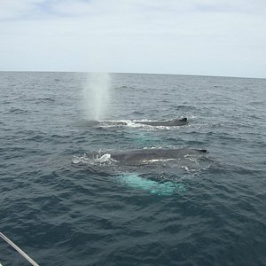 Whale Watching - no stress whales!
