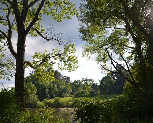 Scene near the pond