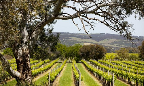 Fox Creek vineyeards