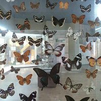one of many butterfly exhibits