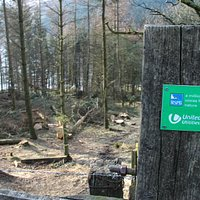 Unadvertised Tree felling activity