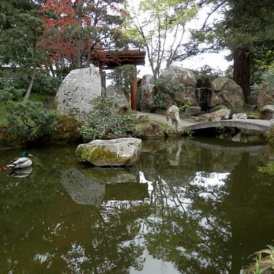 The Japanese Garden  featured on the Urban Nature Tour