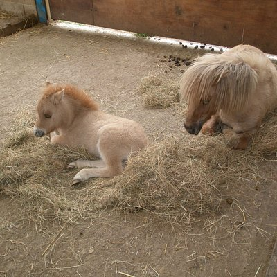 Pony with Foal