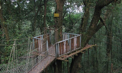 Canopy Viewpoint