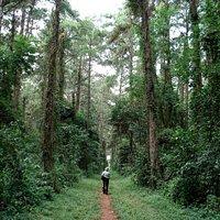 Passeio agradável em meio a floresta