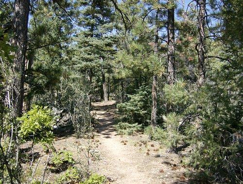 Circle Trail- along the trail