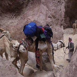 Camel tour, Petra