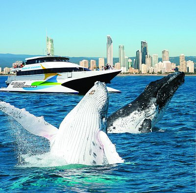 Gold Coast Whale Adventures