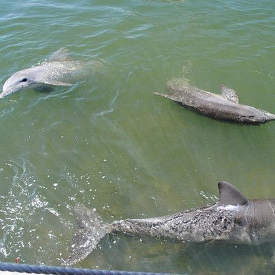 A few of the dolphins.