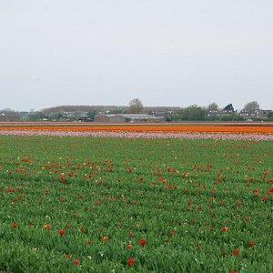 The field next to Van Haaster en De Jong
