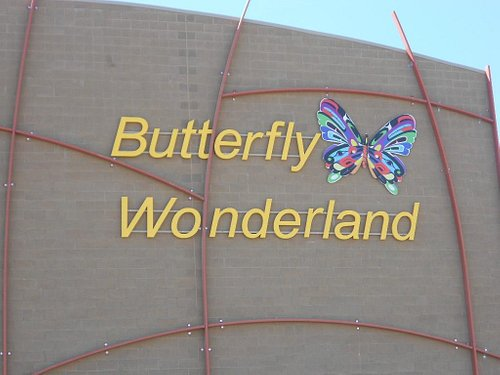 The New Butterfly Wonderland