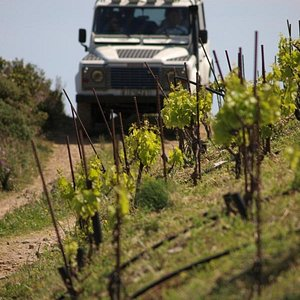 Crossing the vineyards