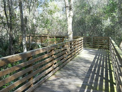 A clean safe boardwalk allows one to view the surounding Florida swampland.