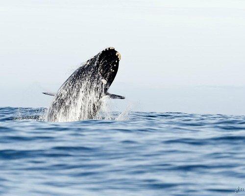 """Feita durante """"Whale Whatch"""""""