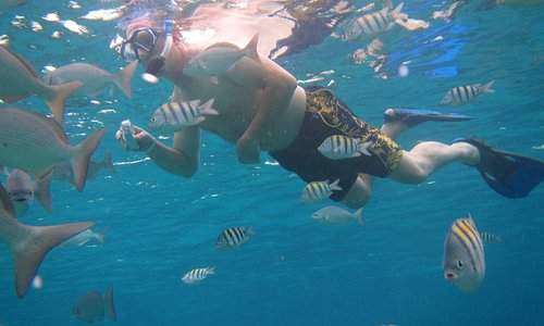 Snorkeling with the fish