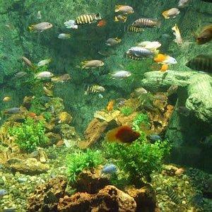 يوجد أيضاً أماكن للحيوانات البحرية والأسماك